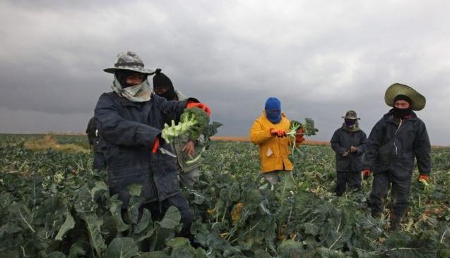 זרים בחקלאות